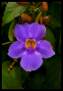 PurpleFlowerKingston28x427x1072ppiweb7815final