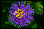PurpleYellowFlower687132x408x10webfinal